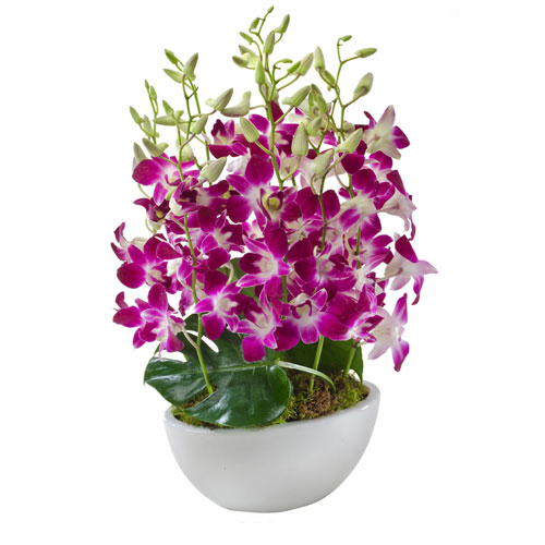 Send christmas flowers australia botanique 39 s blog Christmas orchid arrangements