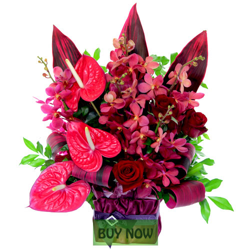 Tropical flowers online for gold coast delivery today tropical flowers