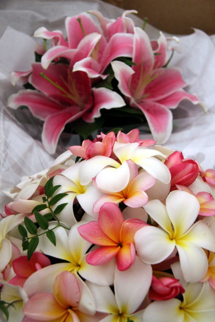 Bridal Flowers Gold Coast : Frangipani pink and yellow import g