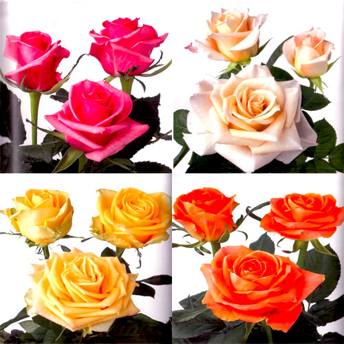 Roses For Online Wedding Flower Packages Gold Coast