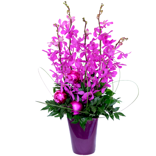 tropical-christmas-flowers-gold-coast-delivery-botanique-florist.jpg